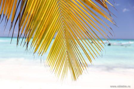 Экскурсия на остров Саона и купание с морскими звёздами в Доминиканской республике