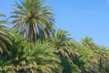 Пальмовый пляж Ваи на острове Крит