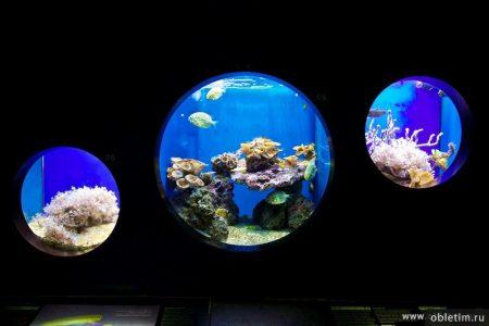 Океанографический музей (океанариум) в Монако
