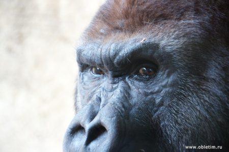 Биопарк в Фуэнхироле, ч.1: общий вид, тигр, обезьяны.